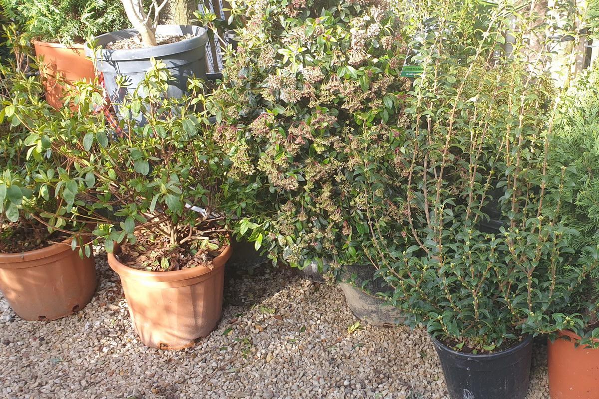Le-jardin-des-oliviers-2021-02-20-001.jpg