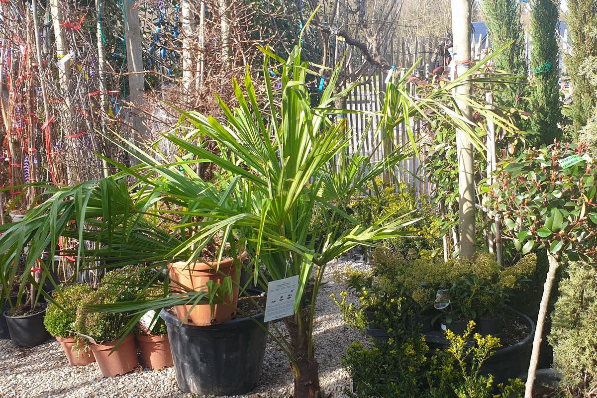 Le-jardin-des-oliviers-2021-02-20-005.jpg