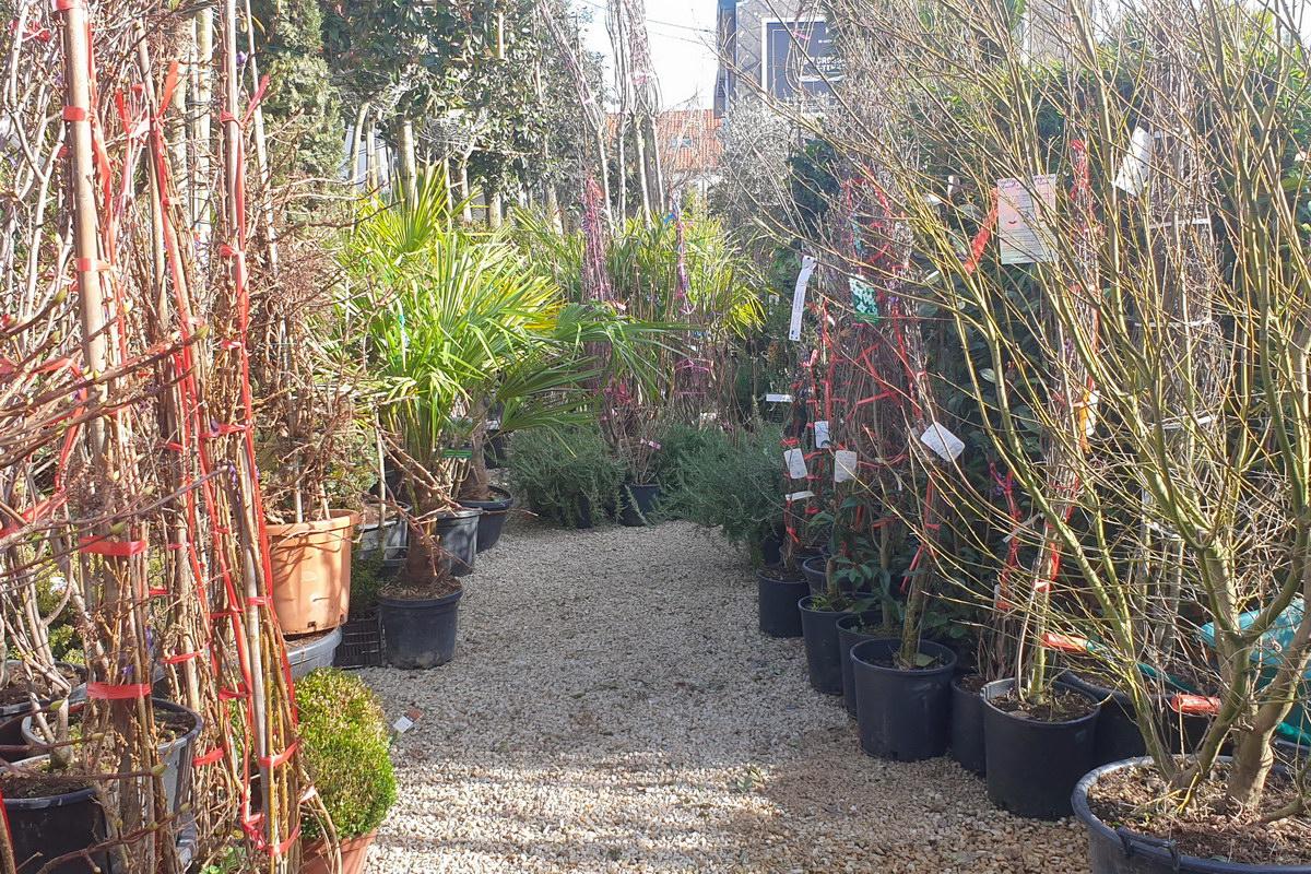Le-jardin-des-oliviers-2021-02-20-007.jpg