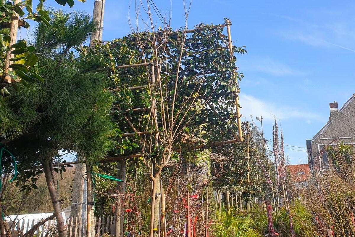 Le-jardin-des-oliviers-2021-02-20-009.jpg