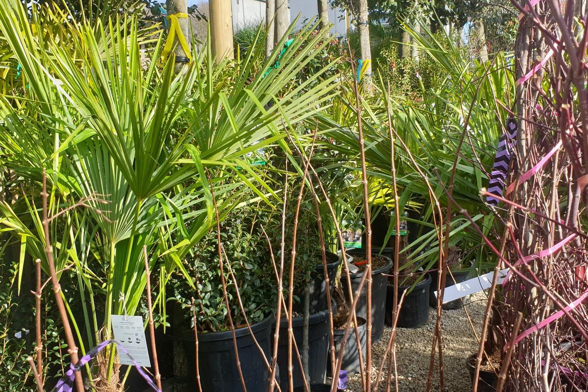 Le-jardin-des-oliviers-2021-02-20-011.jpg