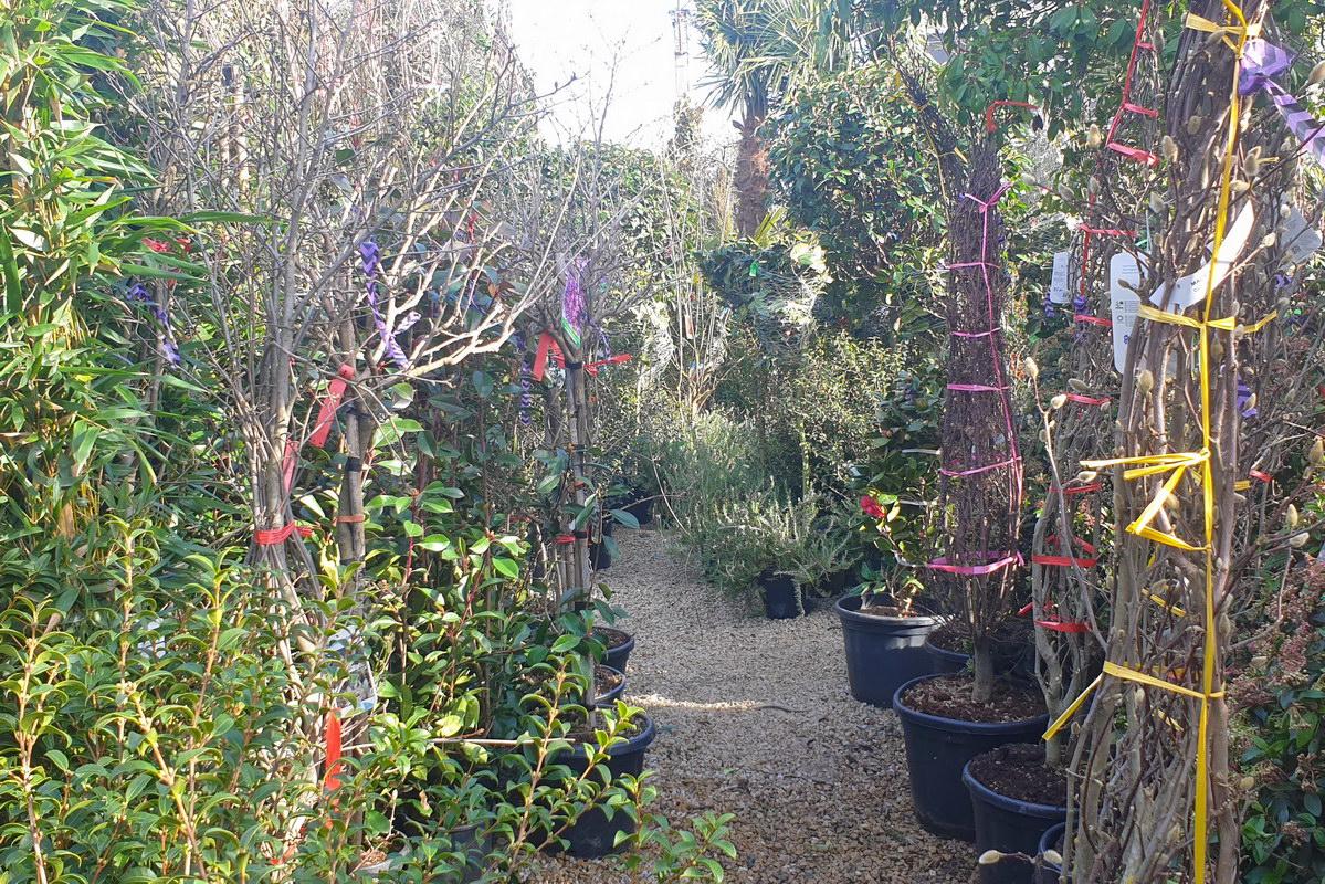 Le-jardin-des-oliviers-2021-02-20-017.jpg