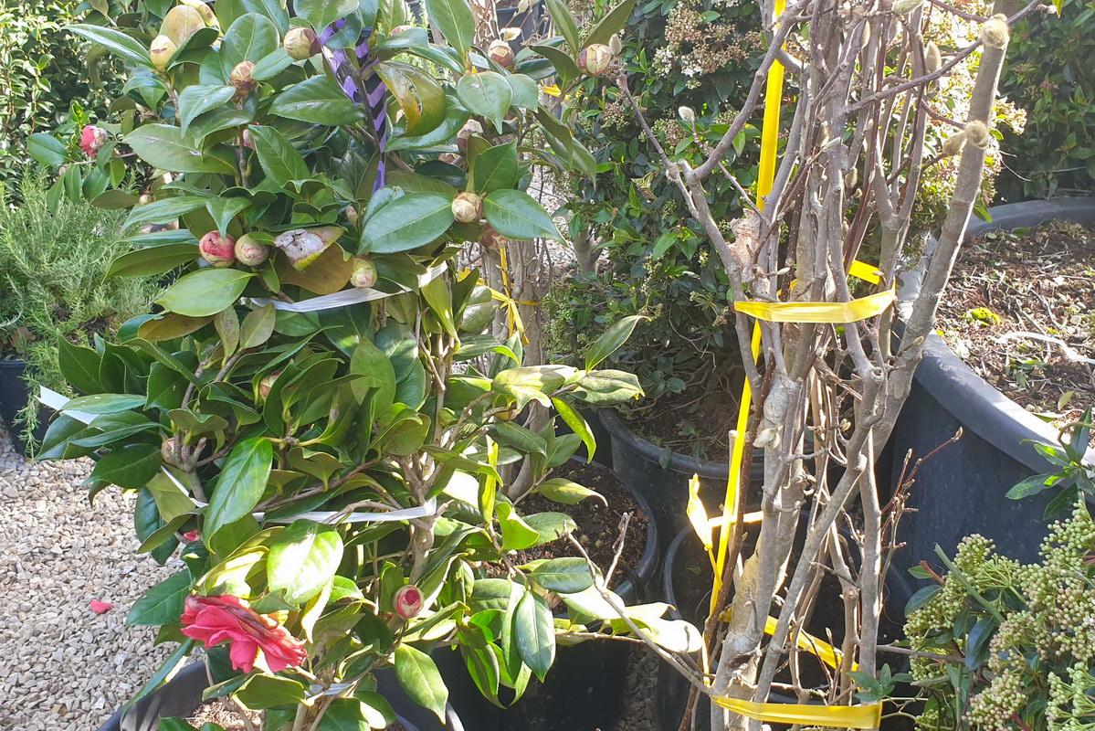 Le-jardin-des-oliviers-2021-02-20-018.jpg
