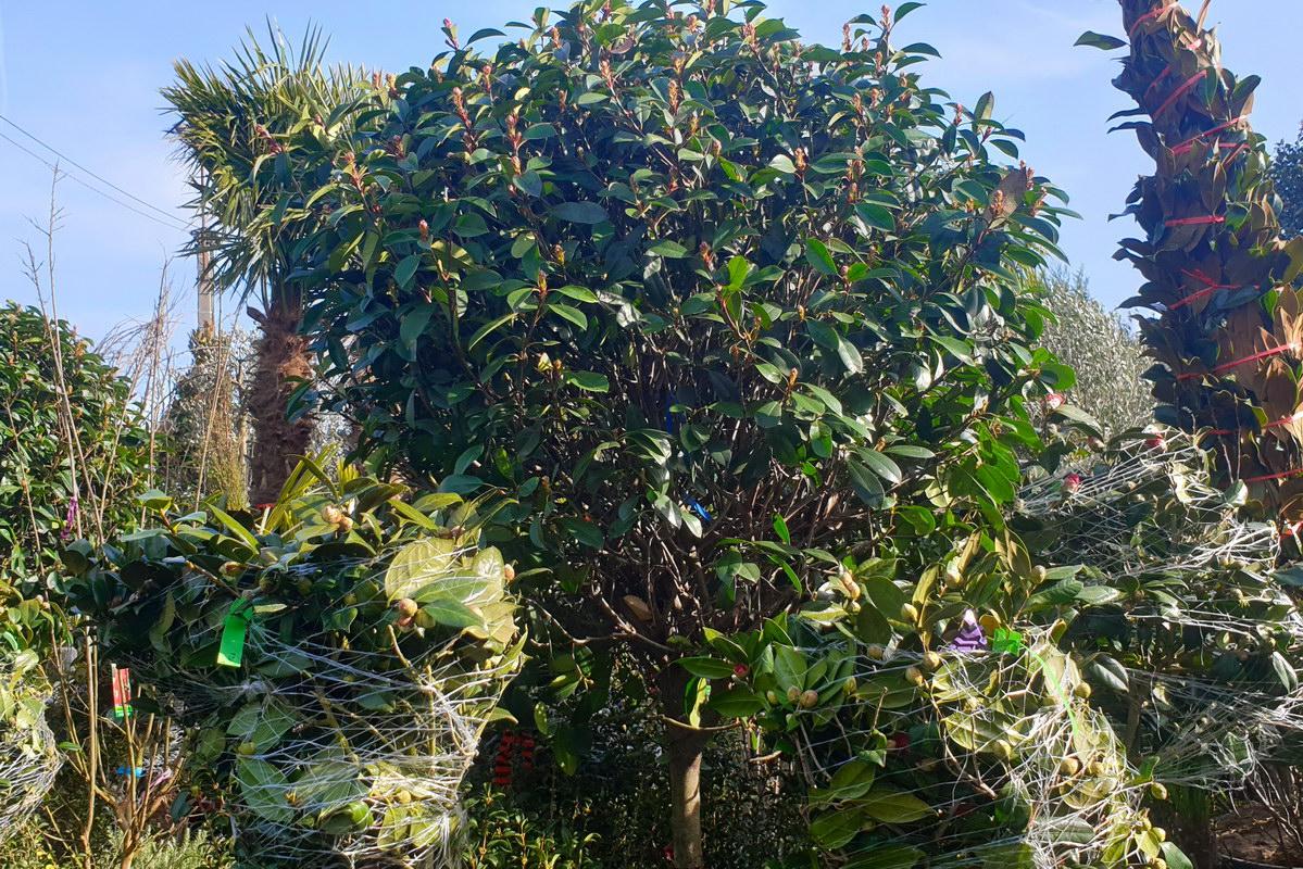 Le-jardin-des-oliviers-2021-02-20-019.jpg