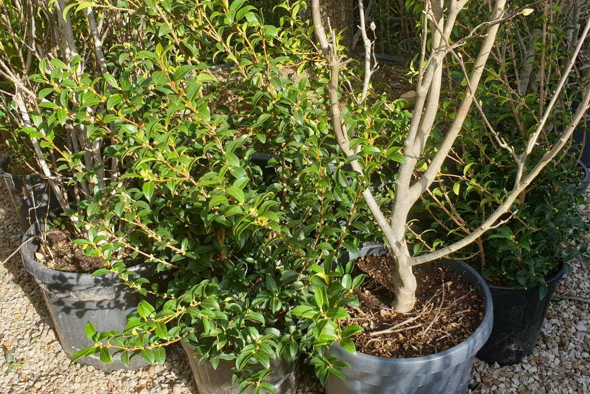 Le-jardin-des-oliviers-2021-02-20-021.jpg