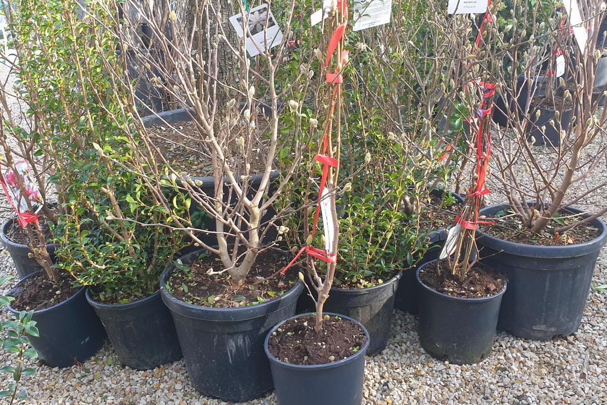 Le-jardin-des-oliviers-2021-02-20-022.jpg