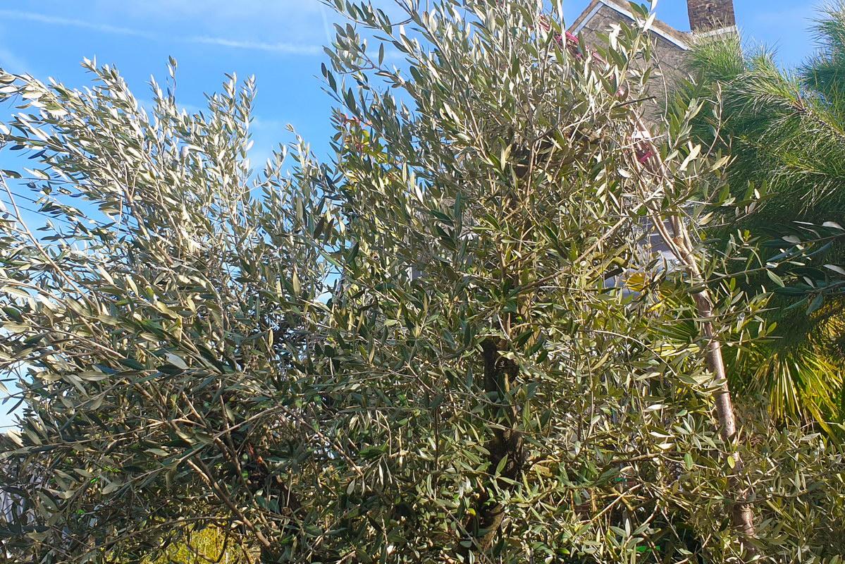 Le-jardin-des-oliviers-2021-02-20-023.jpg