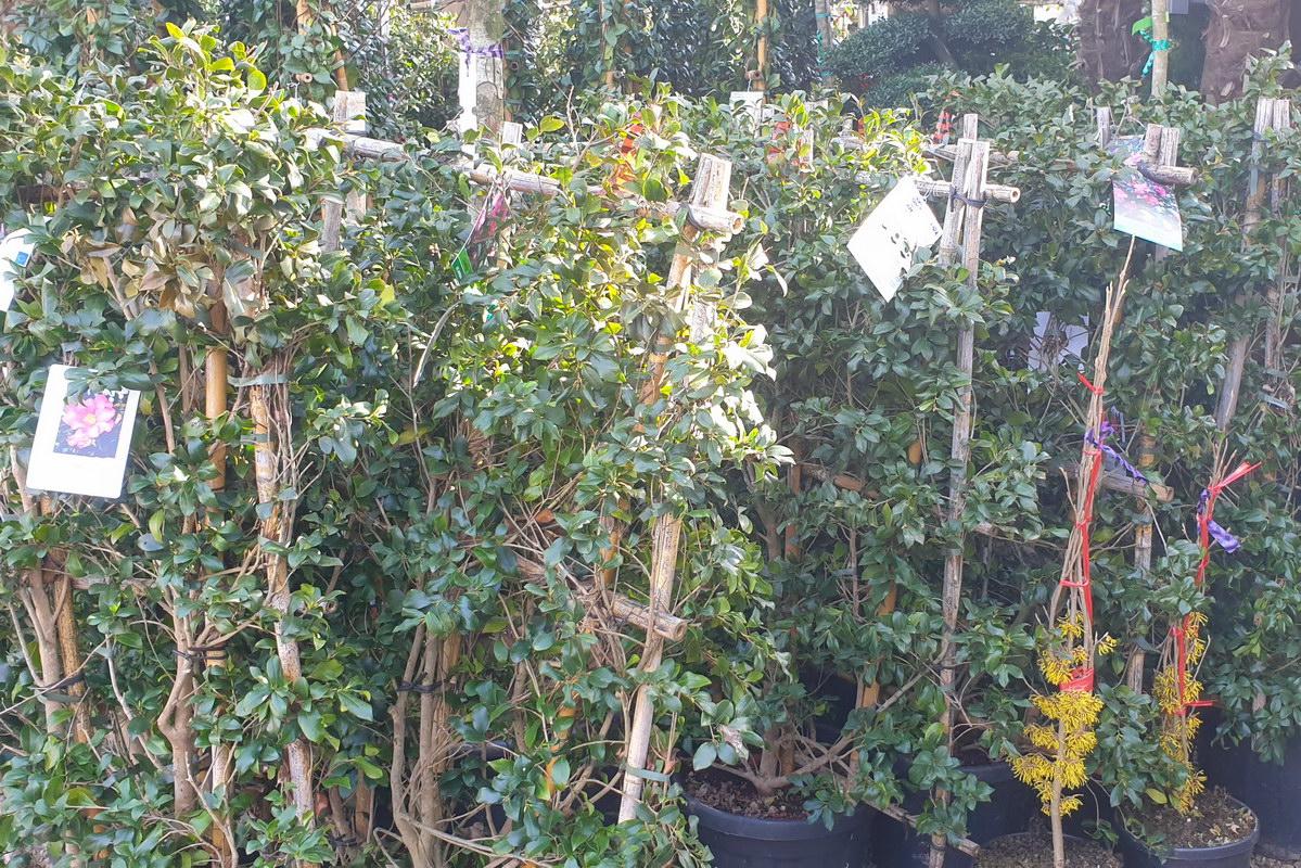 Le-jardin-des-oliviers-2021-02-20-024.jpg