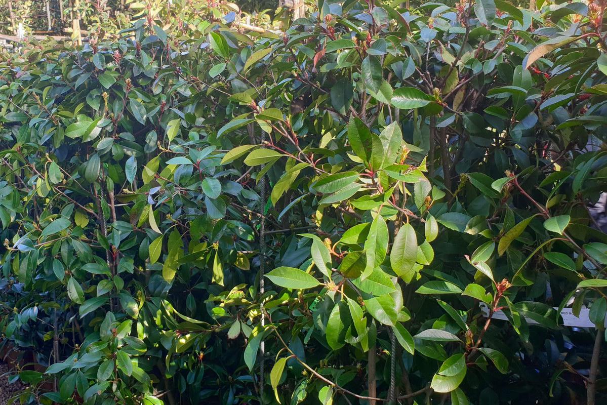 Le-jardin-des-oliviers-2021-02-20-026.jpg