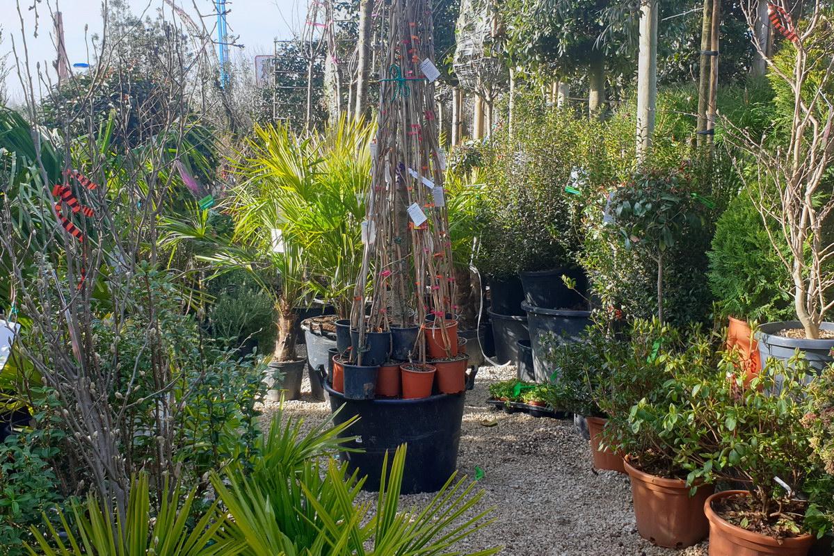 Le-jardin-des-oliviers-2021-02-20-027.jpg