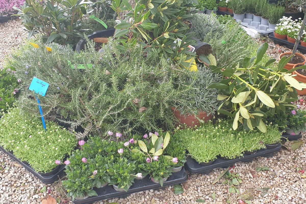 Le-jardin-des-oliviers-2021-03-14_08.jpg