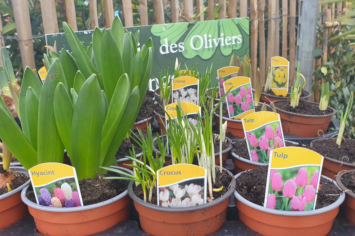 Le-jardin-des-oliviers-2021-03-14_15.jpg