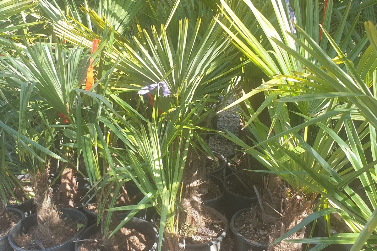 Le-jardin-des-oliviers-20210324-01.jpg