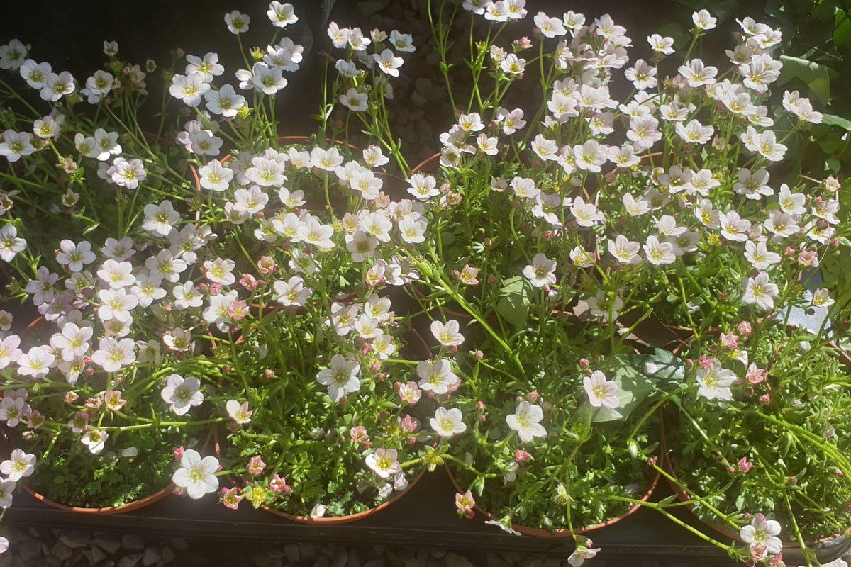Le-jardin-des-oliviers-20210324-04.jpg