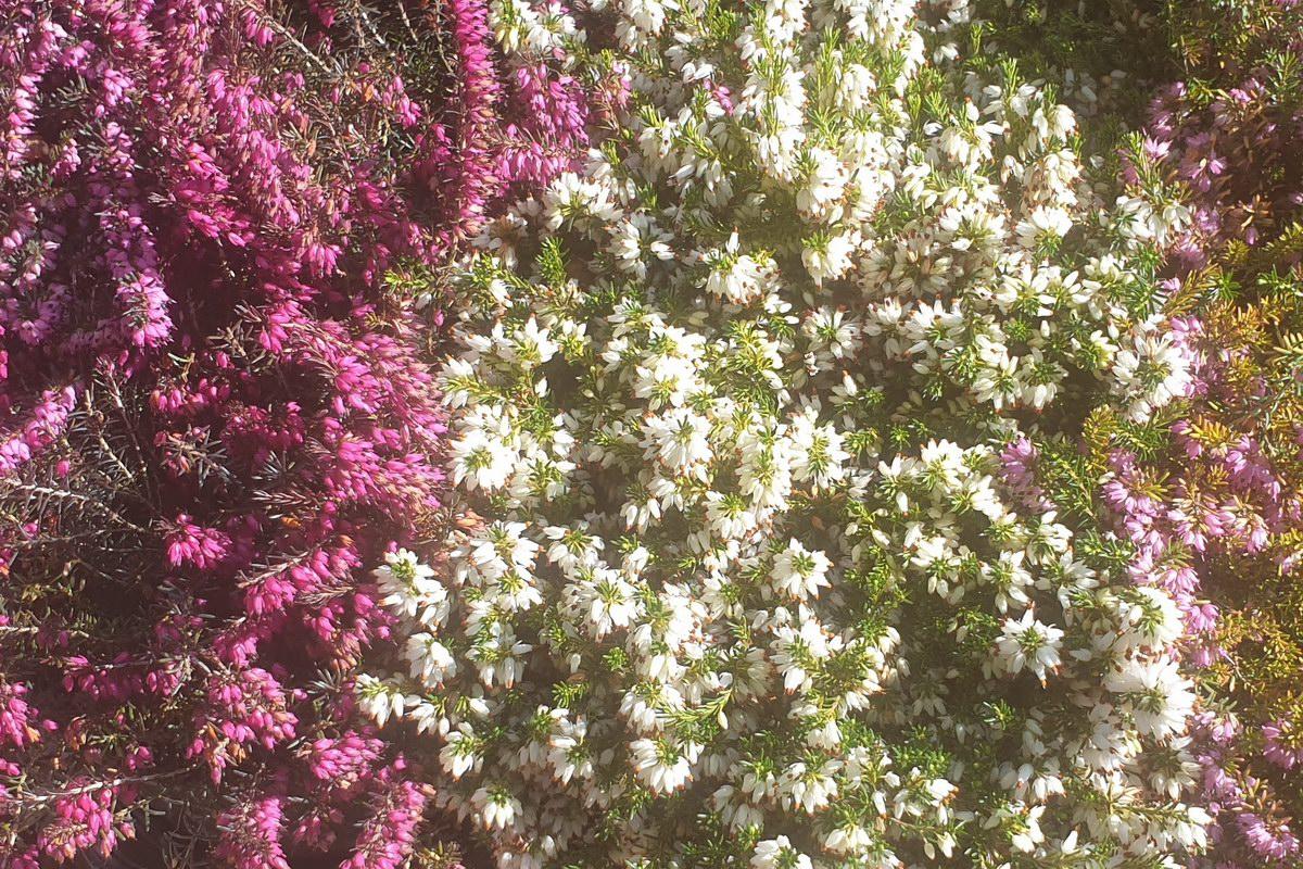 Le-jardin-des-oliviers-20210324-05.jpg