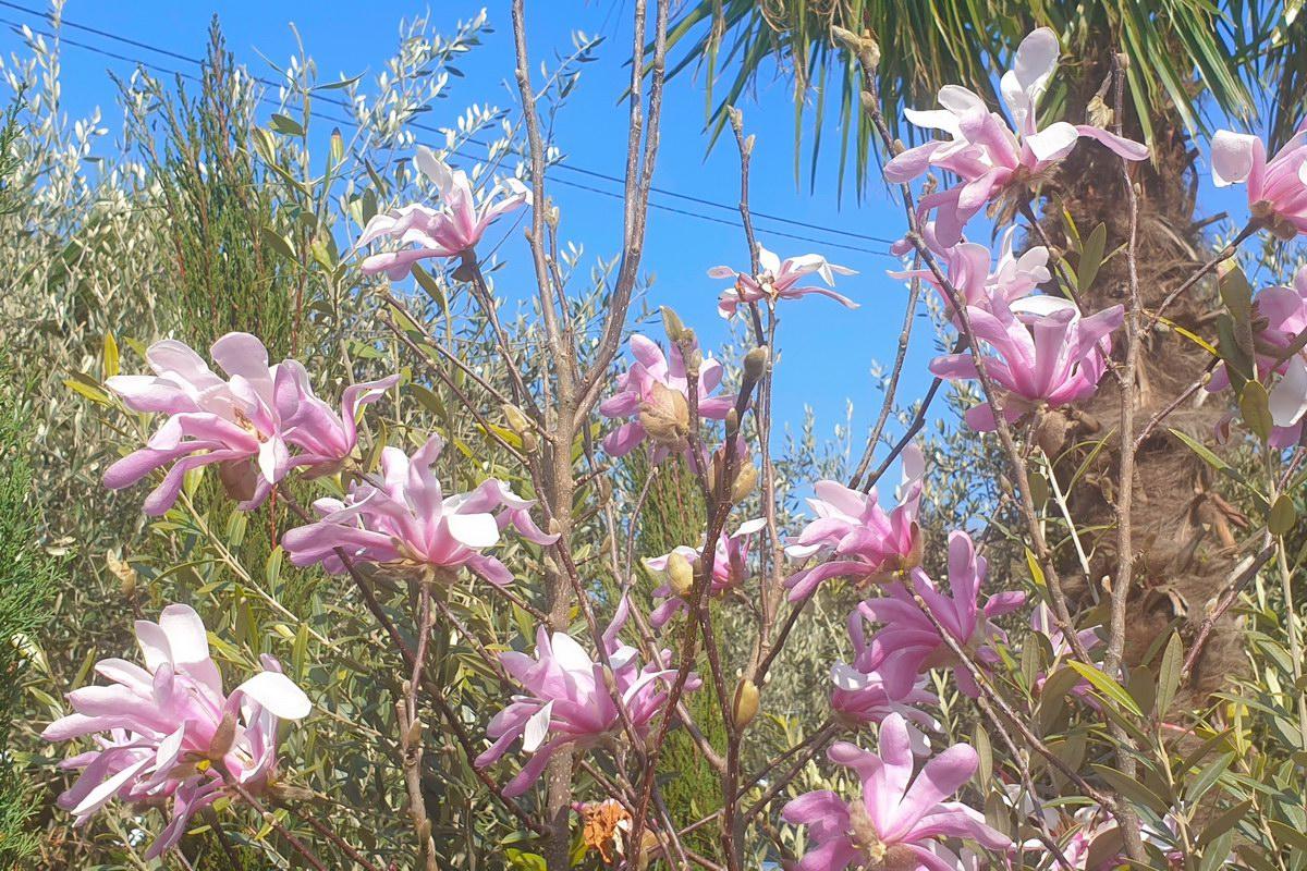 Le-jardin-des-oliviers-20210324-06.jpg