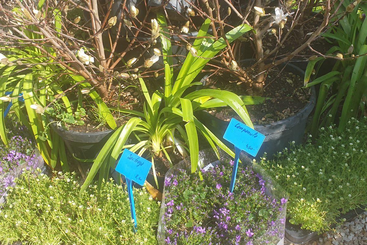 Le-jardin-des-oliviers-20210324-08.jpg