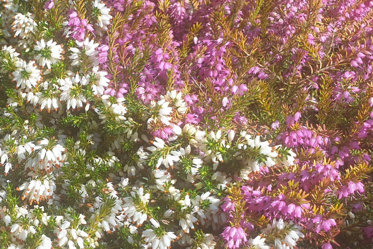 Le-jardin-des-oliviers-20210324-11.jpg