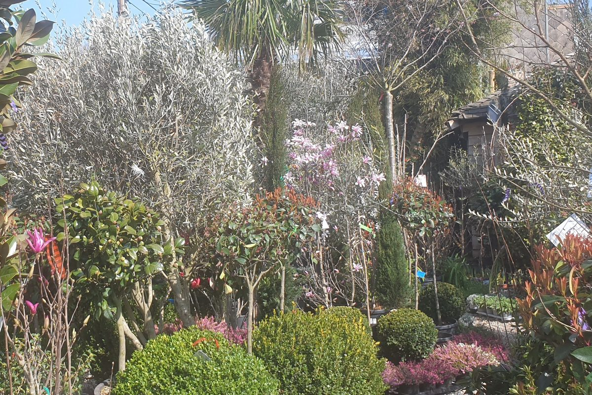 Le-jardin-des-oliviers-20210324-12.jpg