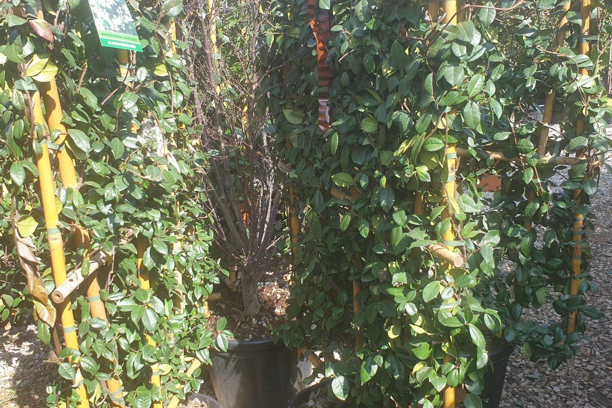 Le-jardin-des-oliviers-20210324-16.jpg