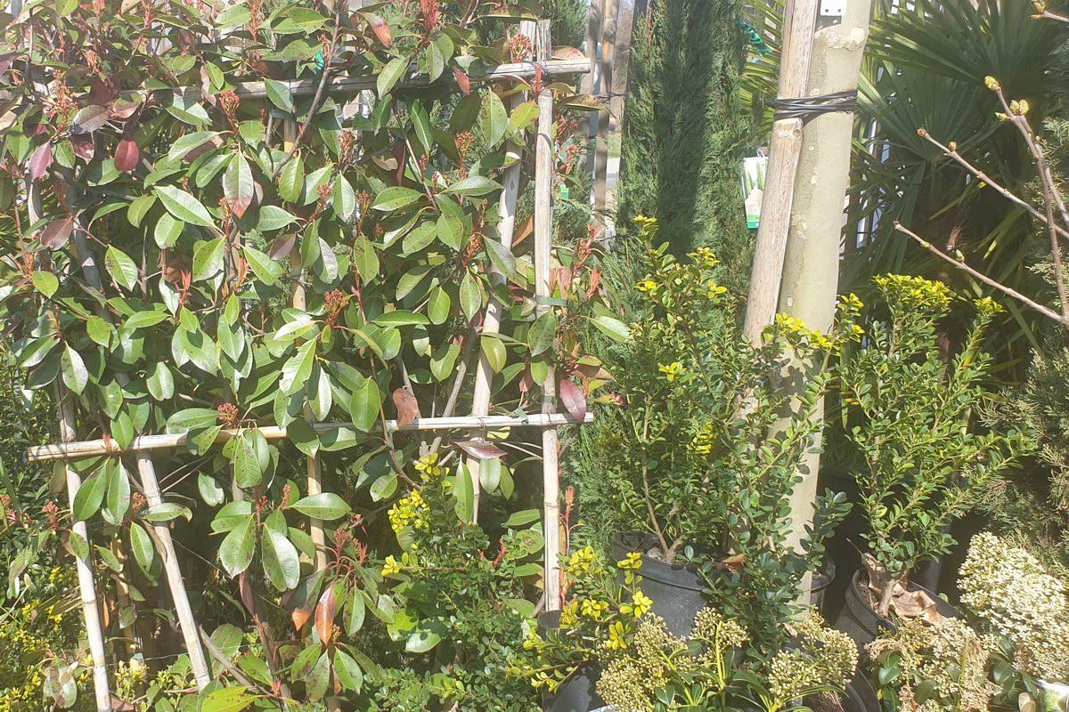 Le-jardin-des-oliviers-20210324-20.jpg