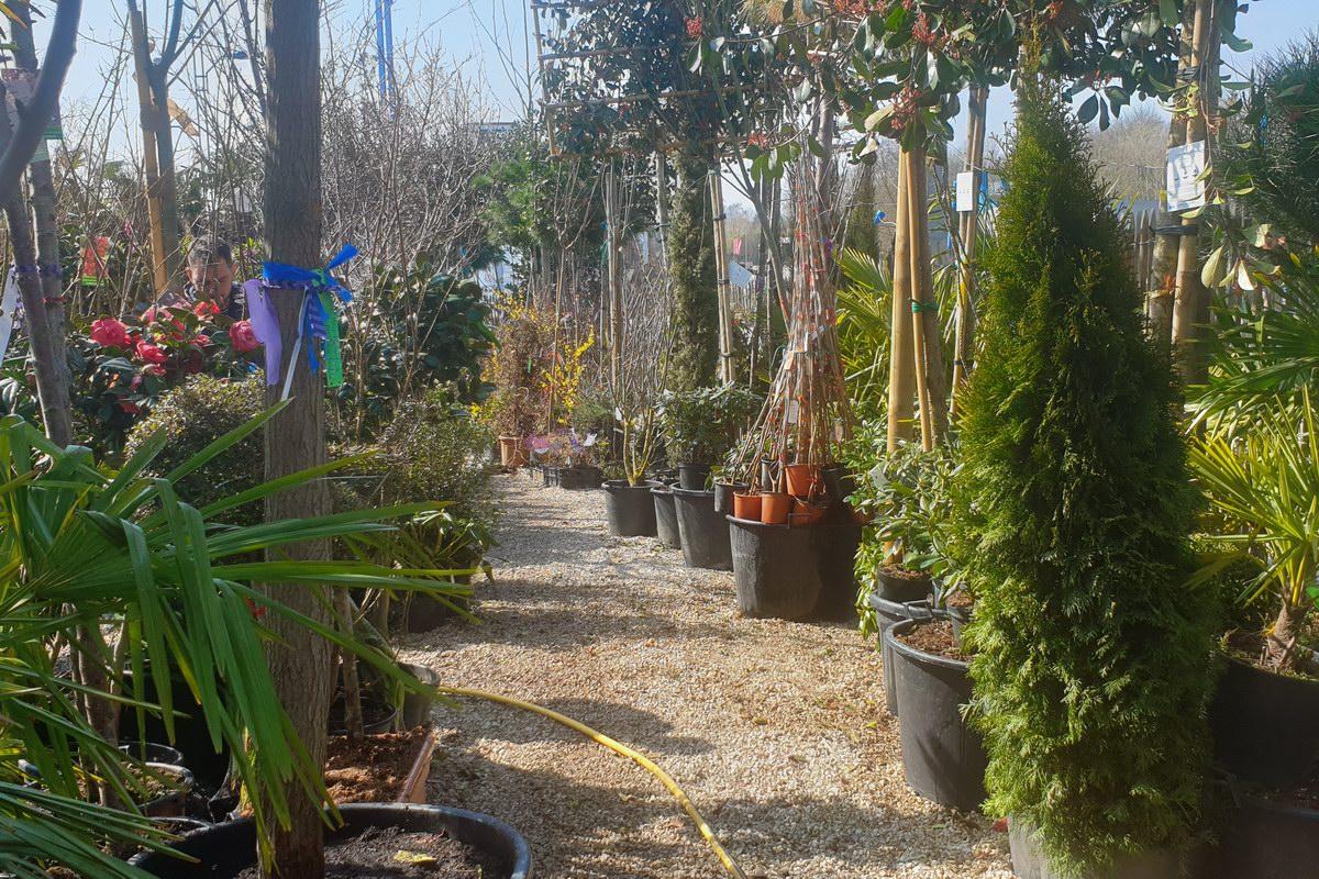 Le-jardin-des-oliviers-20210324-25.jpg