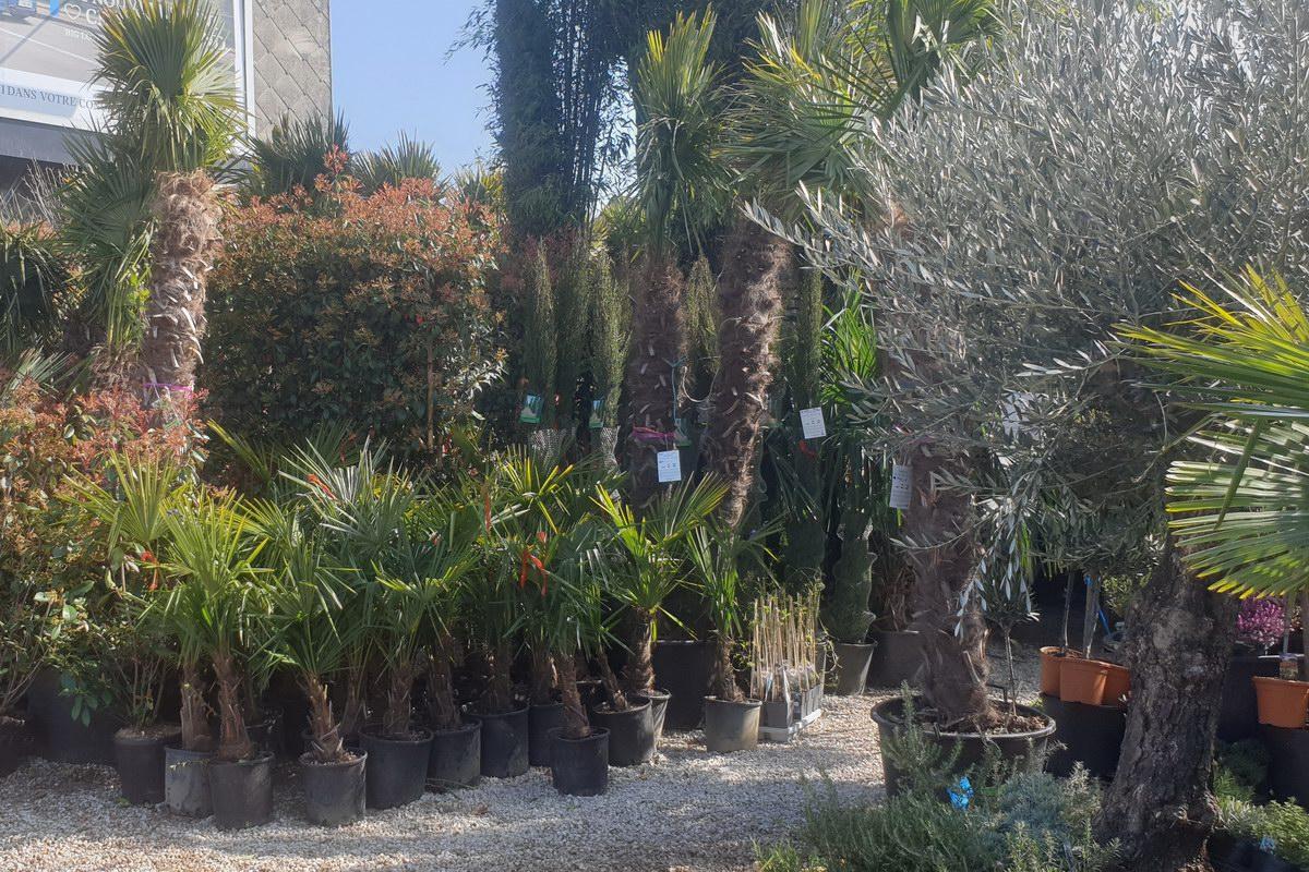 Le-jardin-des-oliviers-20210324-26.jpg