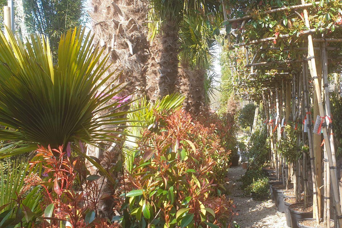 Le-jardin-des-oliviers-20210324-31.jpg
