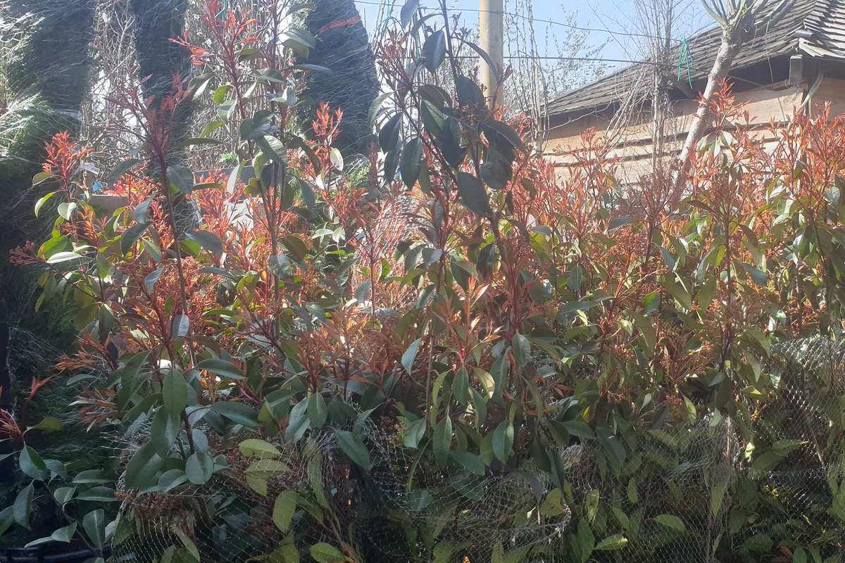 Le-jardin-des-oliviers-20210324-32.jpg