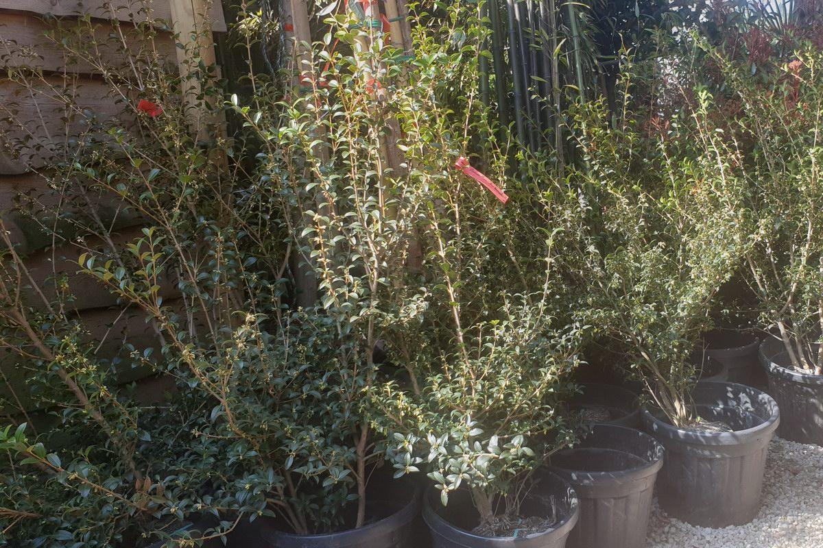 Le-jardin-des-oliviers-20210324-33.jpg