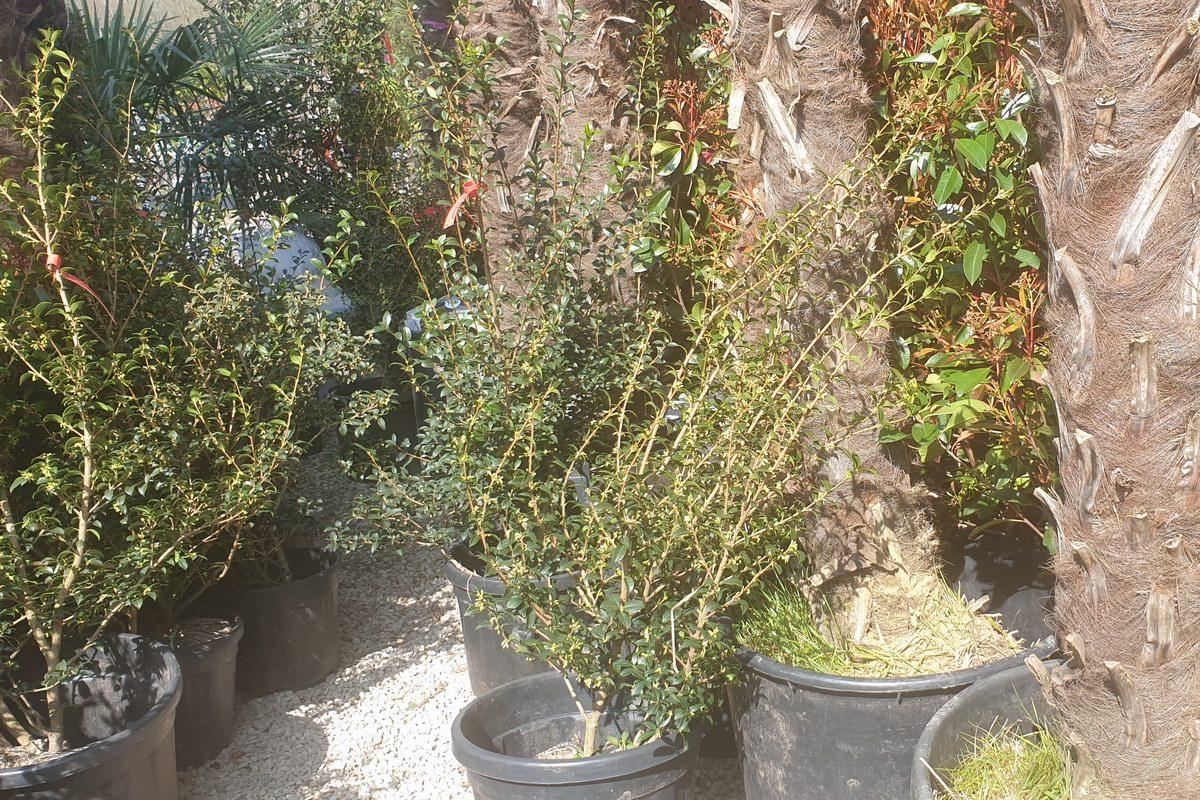 Le-jardin-des-oliviers-20210324-35.jpg