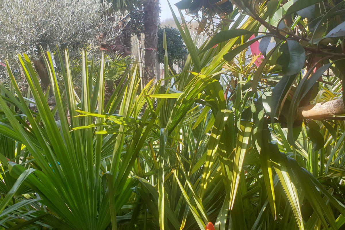 Le-jardin-des-oliviers-20210324-36.jpg