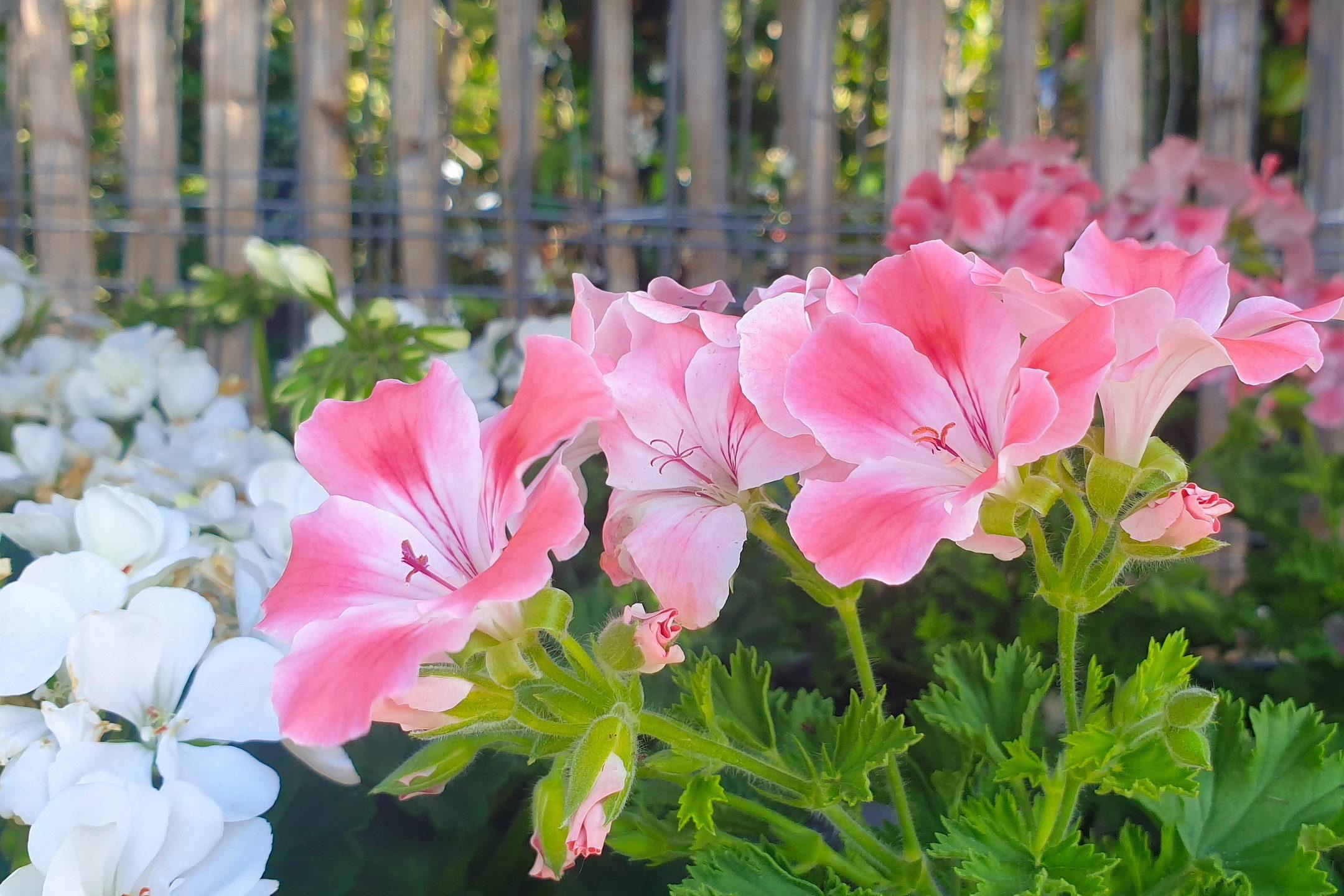 Le-jardin-des-oliviers-21-06-12-05.jpg