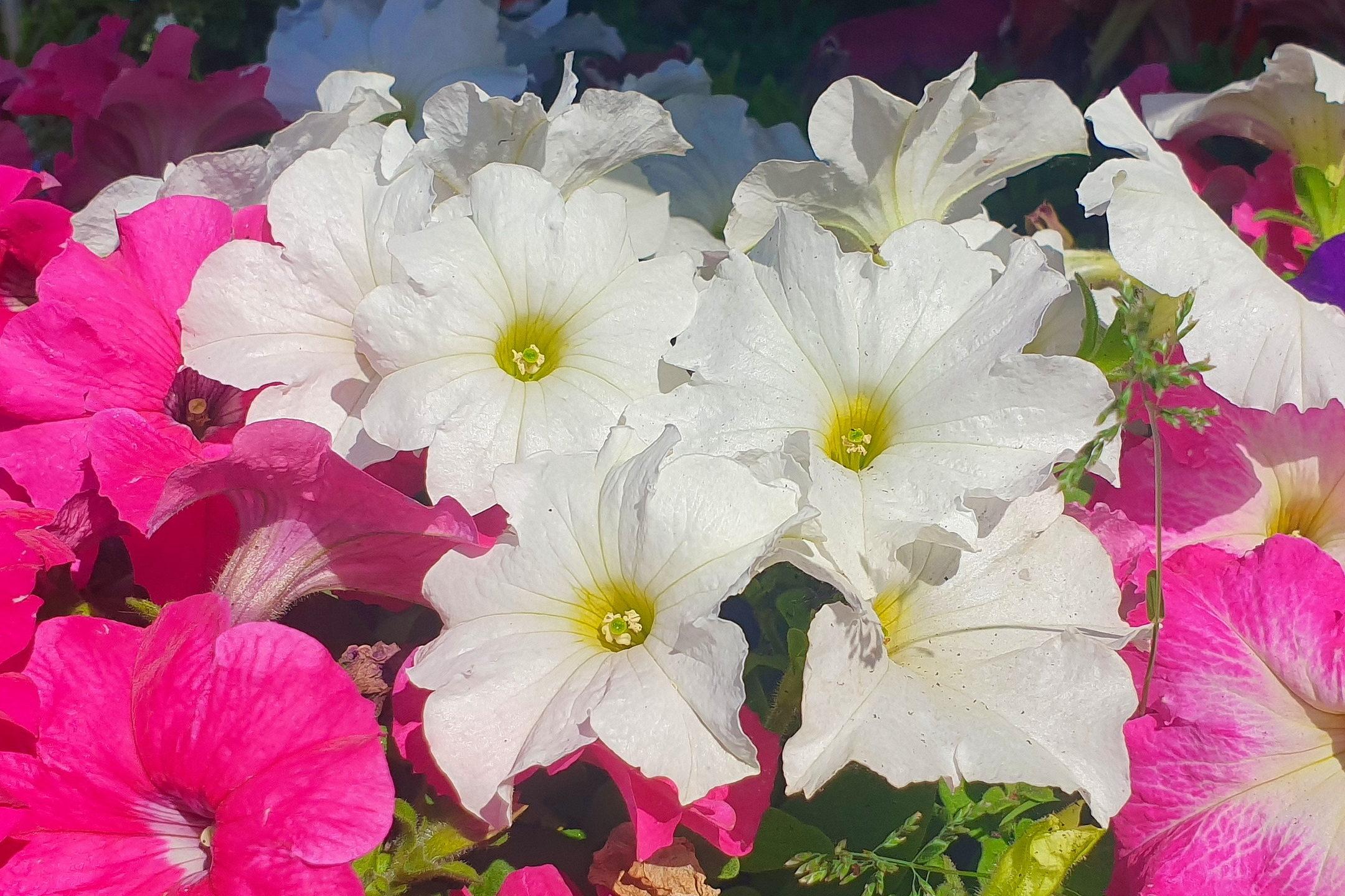 Le-jardin-des-oliviers-21-06-12-07.jpg