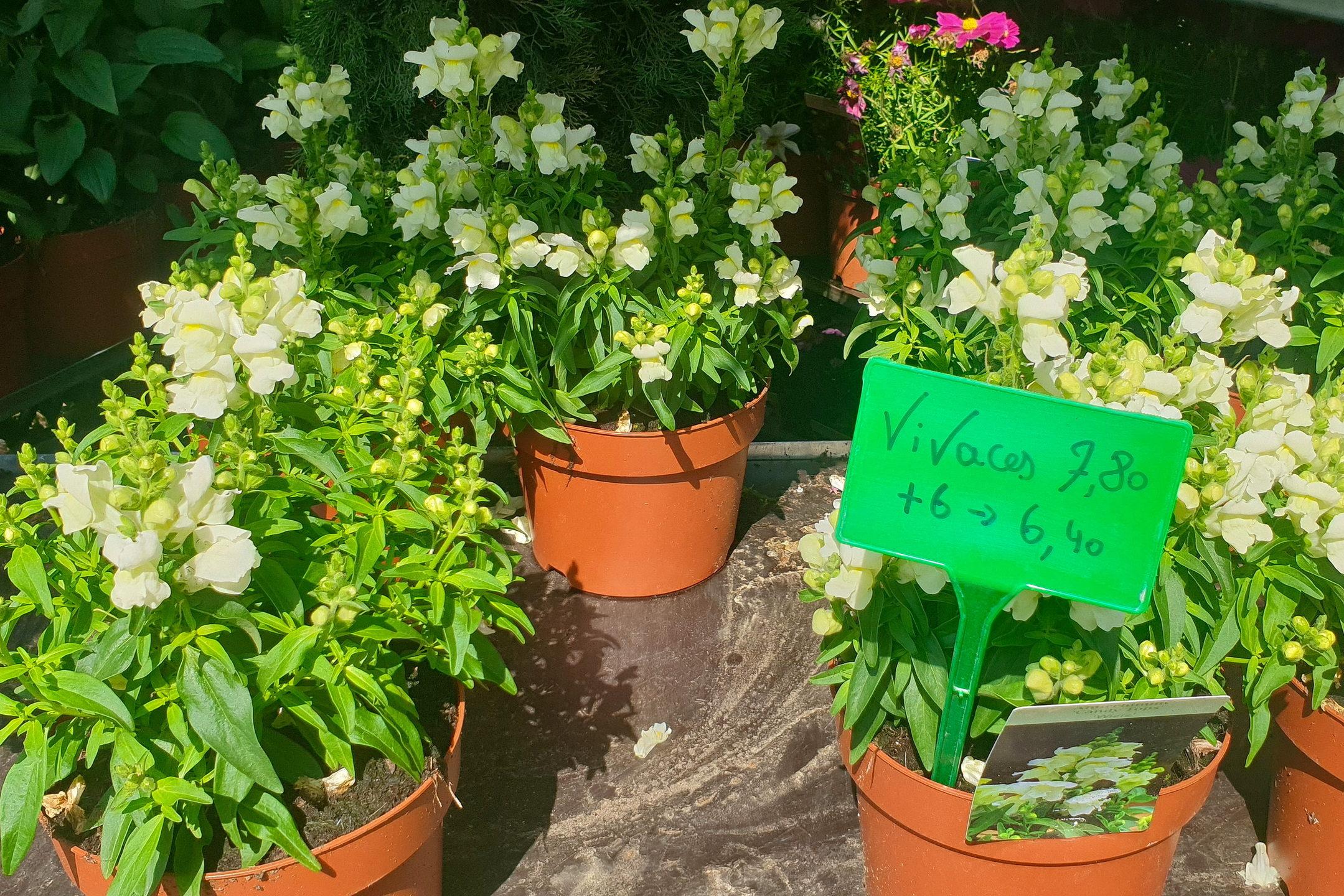 Le-jardin-des-oliviers-21-06-12-09.jpg