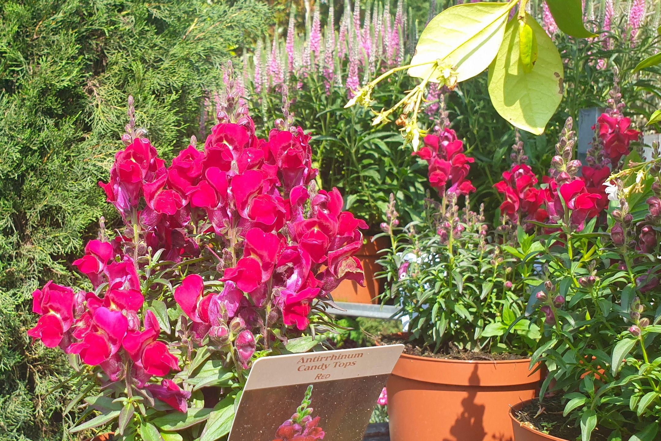 Le-jardin-des-oliviers-21-06-12-10.jpg