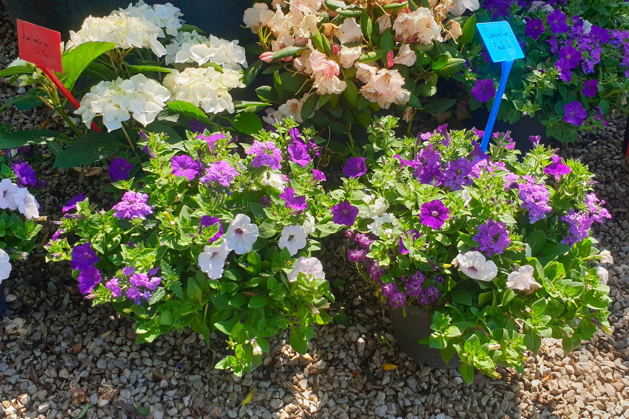 Le-jardin-des-oliviers-21-06-12-11.jpg