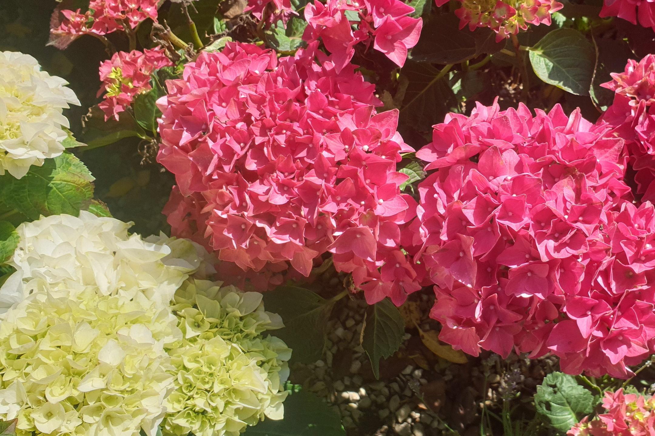 Le-jardin-des-oliviers-21-06-12-12.jpg