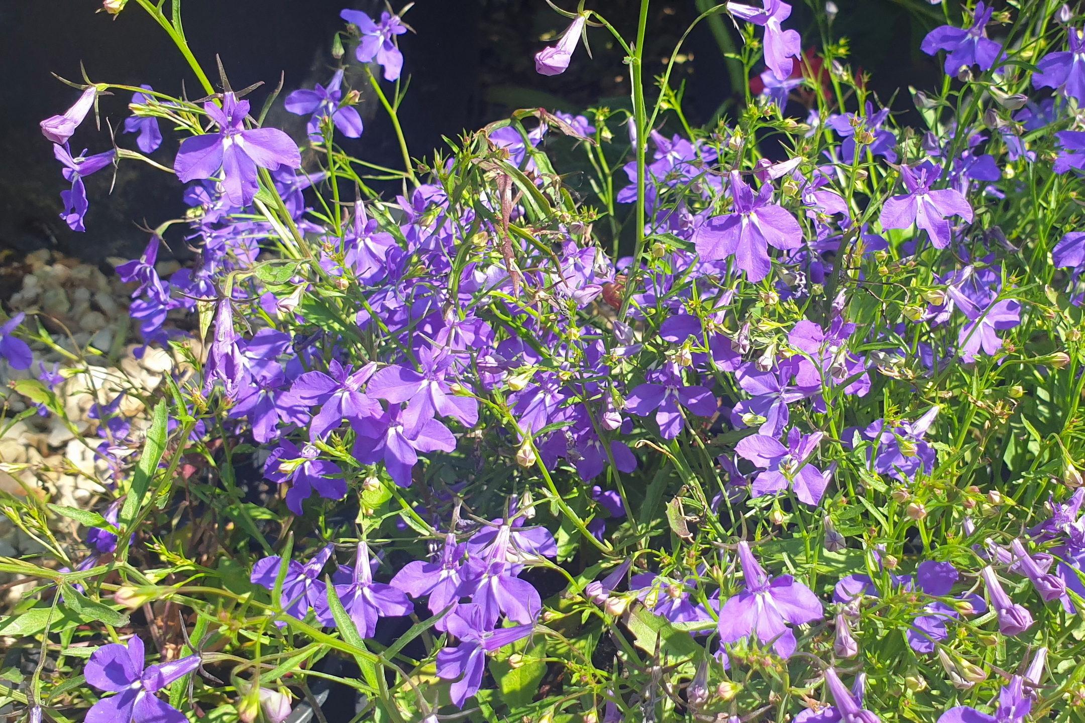 Le-jardin-des-oliviers-21-06-12-13.jpg