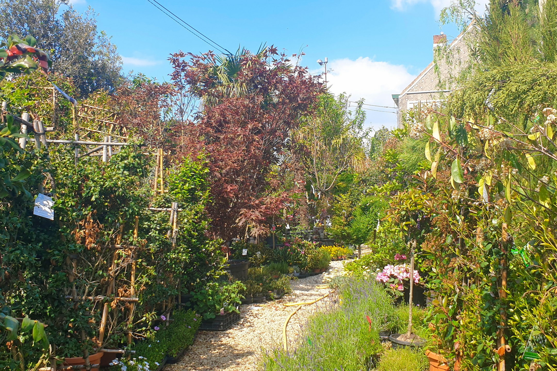 Le-jardin-des-oliviers-21-06-12-14.jpg