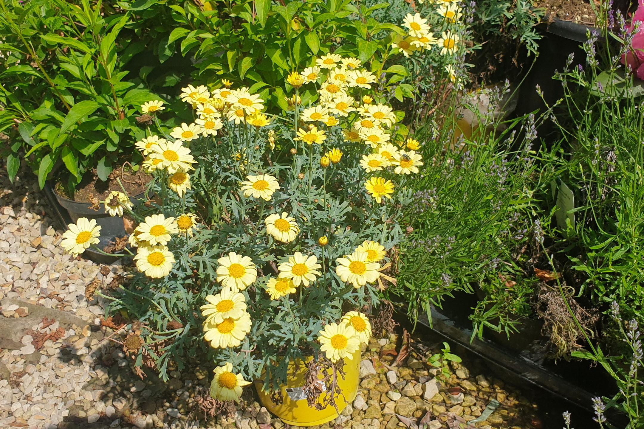 Le-jardin-des-oliviers-21-06-12-15.jpg