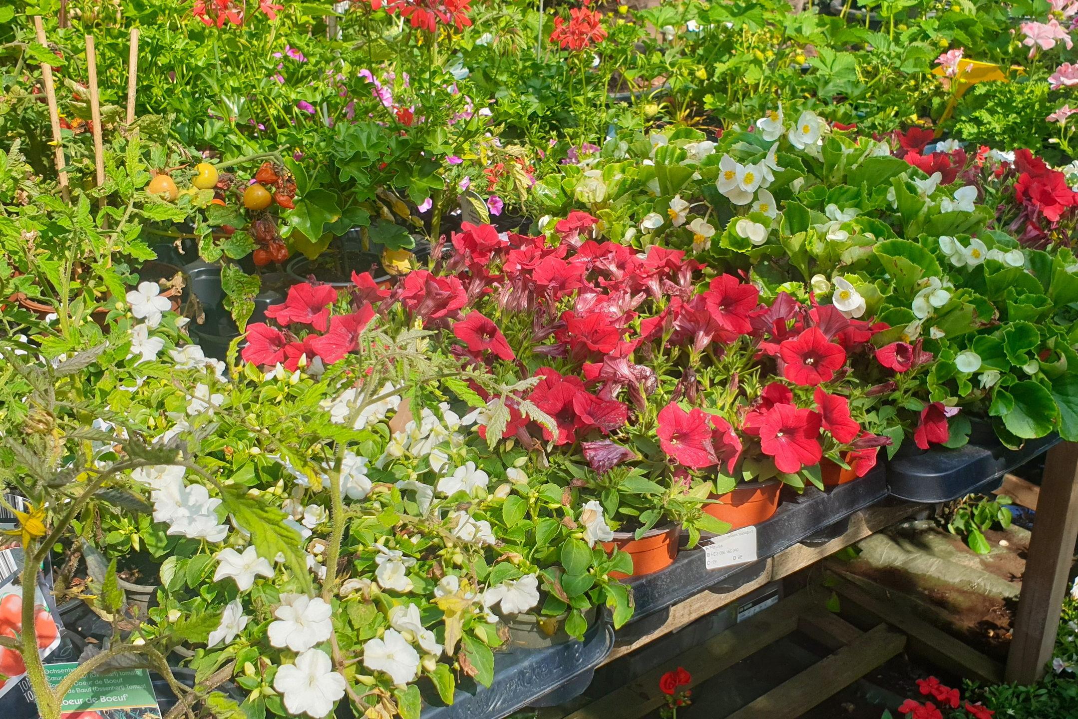 Le-jardin-des-oliviers-21-06-12-17.jpg