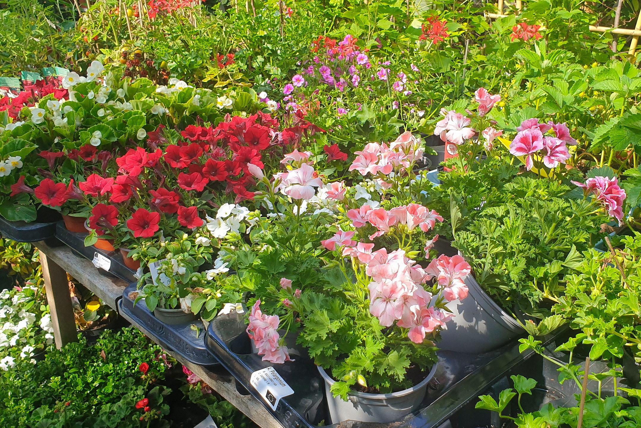 Le-jardin-des-oliviers-21-06-12-18.jpg