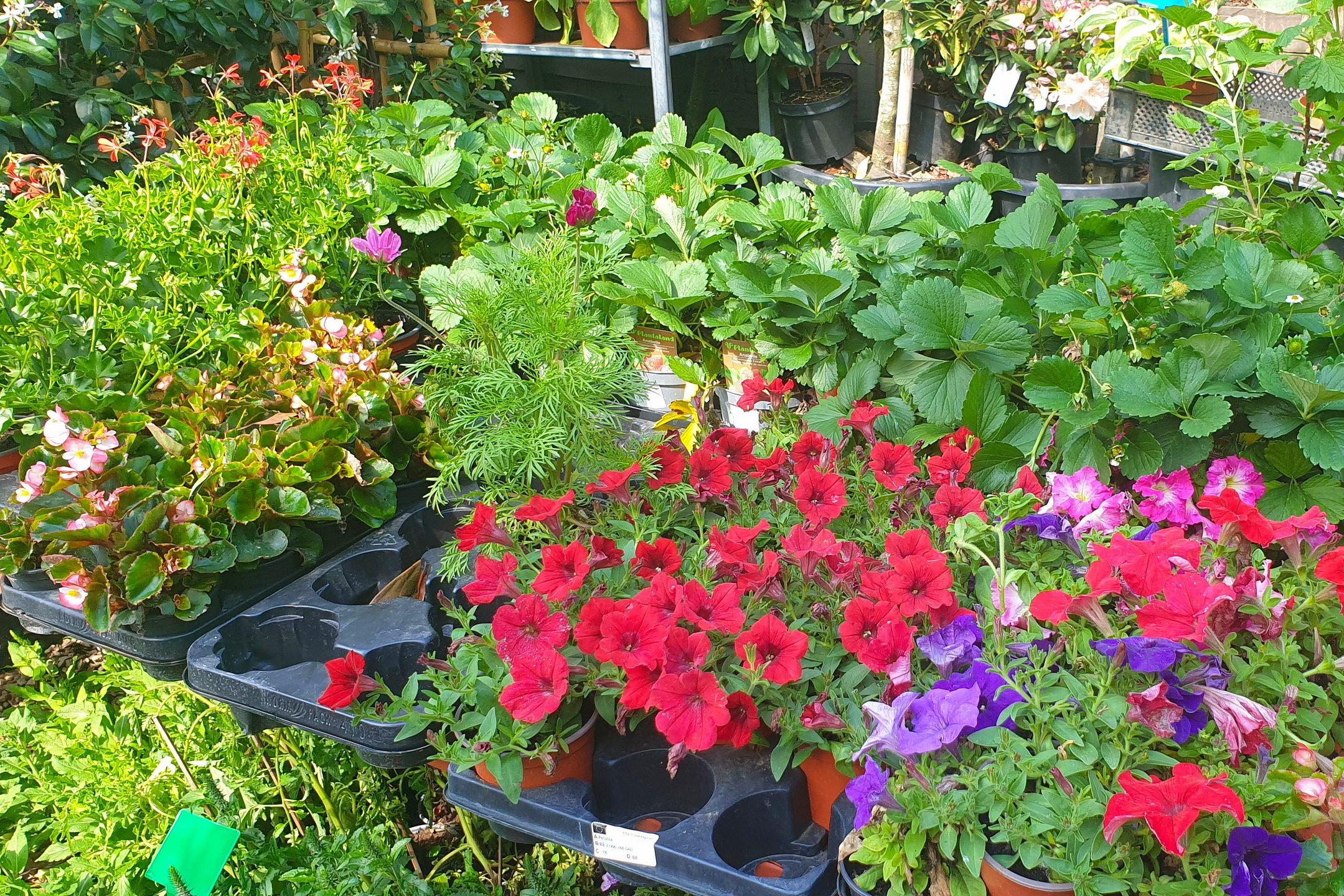 Le-jardin-des-oliviers-21-06-12-19.jpg