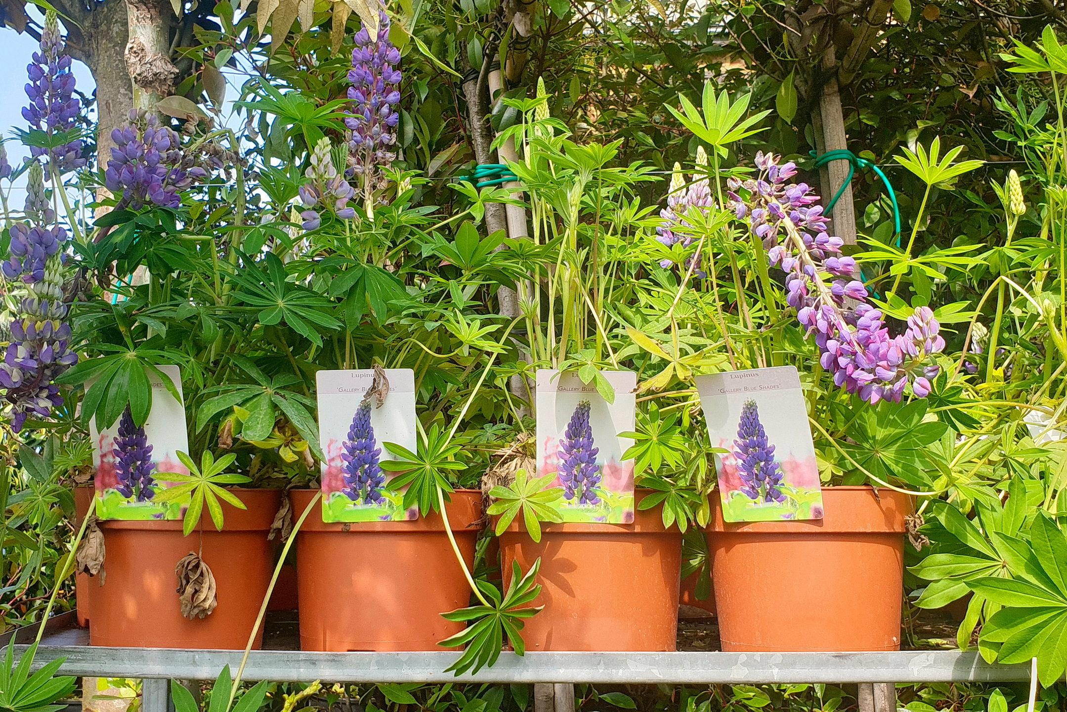 Le-jardin-des-oliviers-21-06-12-21.jpg